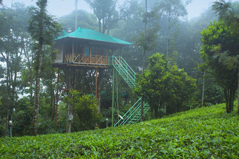 Dreamcatcher-resort-munnar2